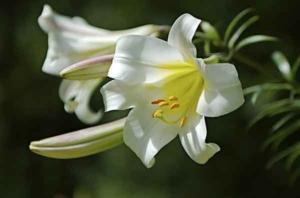 Понемногу о многом: азбука цветов
