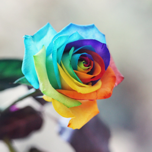 Крашеные розы