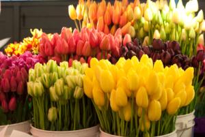 Тюльпаны на заказ в Воронеже