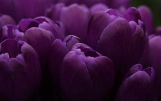 цветочная этика о чем могут рассказать цветы