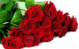 как выбрать хорошие цветы