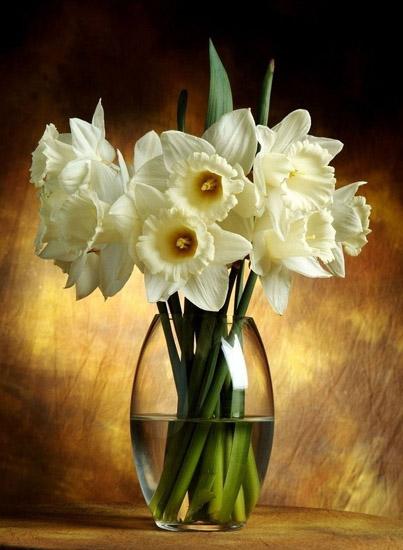 Белые нарциссы в вазе